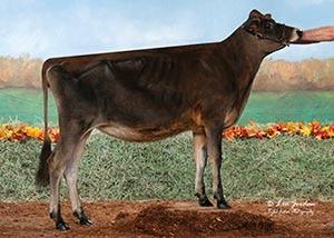 Meadowridge Jax Tulip_18