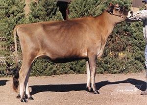01_DKG Renaissance Charm_heifer