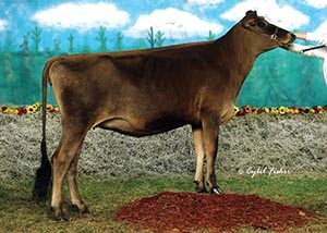 02_Burlin Stars-N-Stripes_heifer