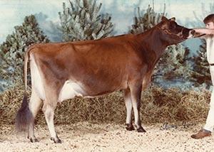 Bridon NSA Gladys_1984
