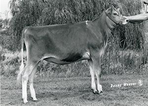 Avonlea Valiant Kitty_1982