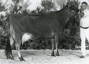 Echobrook Samares Noreen_1981_1980