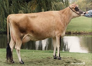 Juno Golden Trish of SSF_1994