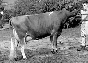 Milestone Milkman Lily Pride1