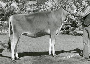 Mullins Sable of Pleasant Ridge_1986