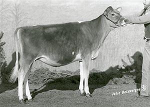 Reichards Star Dora_1987