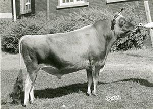 Basil Royal Osford Aim_1959