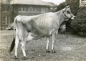 Brampton Jester Dream_1946