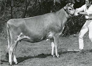 Brilliant Givia Dot_1969