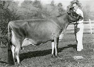 Chief's Advancer Jester Rose_1964