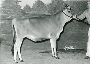 Dazzler's Tarita_1964