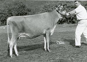 Draconis Ena Maid_1960