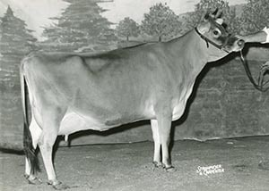 Ettas Milestone Sybil Lass_1963