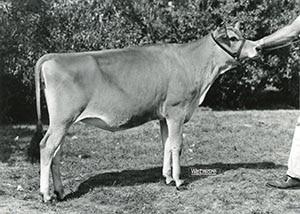 King Geranium Gem_1967