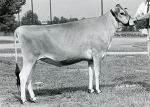 Maraview Royal Pansy Blue_1971