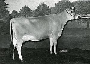 Milestone Hay Rake_1965