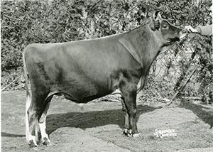 Mordale Basil's Venture_1962