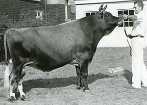 Mordale Basil's Venture_1963