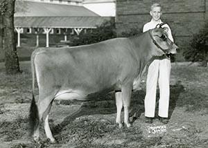 Sparkling Beauty Fern_1948