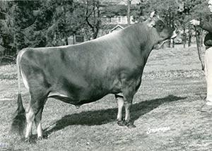 Sporting Farmer_1965