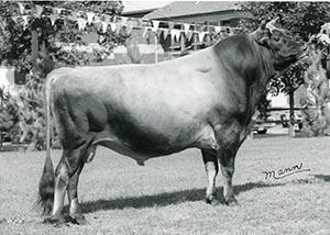 Toreador The Ambassador_1971