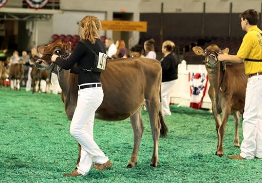 junior-calf-class-open