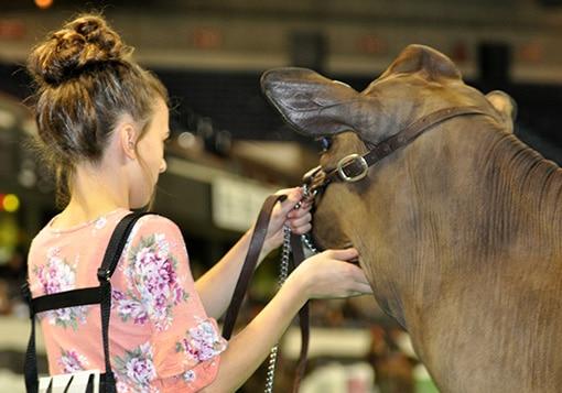 senior-calf-class-girl