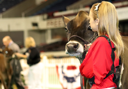 summer-yearling-open-show-girl