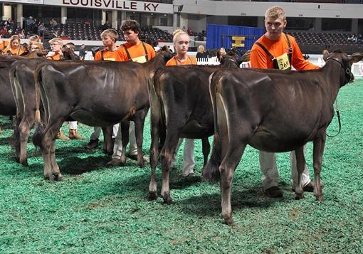 Top Senior Calves - Junior Show