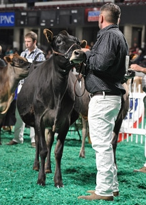 Spring Yearling Class - Open Show